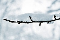 close_up of a branch covered by a snow on blurry background