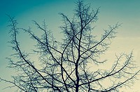 Leafless tree against sky