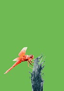 Illustration Of Fly On Green Background