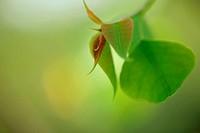 New Leaf, Macro Image