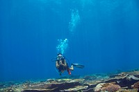 Female scuba diver swimming just above a coral reef, looking toward the camera _ copyspace