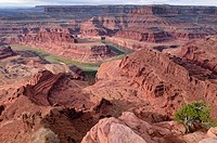Colorado River Canyon, Gooseneck, Dead Horse Point State Park, Moab, Utah, USA