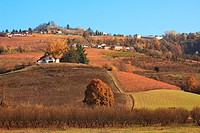 Hills and vineyards of Piedmont at fall. Northern