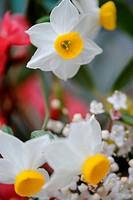 Gentle field flowers