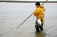 Fisherman with catch of flounders locally called butts, caught using ´ butt fork´ to spear fish in saltwater tidal channel, Norfolk, England, may