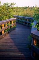 boardwalk in the Everglades, Florida
