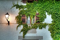 ivy-covered house. Lecunberri. Navarra. Spain