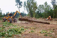 A tractor with grapple moving a log, portland oregon united states of america