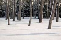 Snow covered forest with tree trunks covered on one side with snow and shadows in the snow, calgary alberta canada
