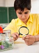 Schoolboy examining daisy in classroom
