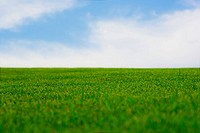 Vibrant green grass