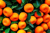 Mandarine orange tree for celebrating Chinese New Year