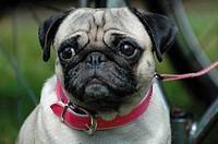 A small cute dog