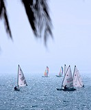 Enjoying The Summer On The Ocean With A Yachting Race