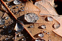 Blatt mit Wassertropfen, Leaf with water droplets