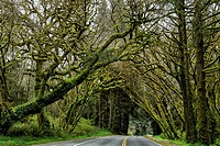 Moss covered trees over road