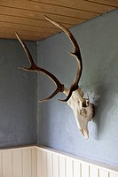 An animal skull with antlers hanging on a wall