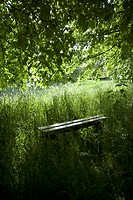 A bench amongst lush foliage in a remote natural setting