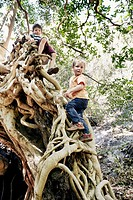 Children climbing tree together