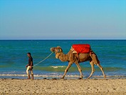 Man pulling his camel on the beach, Djerba, Tunisia