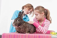Girl and boy looking at rabbit