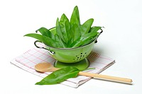 Ramson leaves in sieve / Allium ursinum / colander