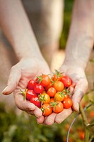 handful of red tomatoes
