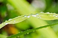 Plant leaf with drops of water
