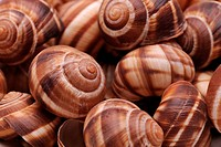 Texture of empty snail shells