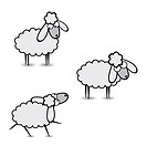 Gray sheep