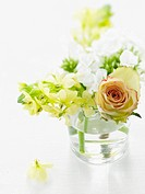 little bunch of flowers on white background