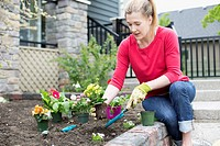 Pretty, middle aged woman planting flowers