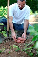 Man in garden kneeling down by potatoes