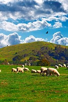 Farmland _ New Zealand