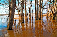 flood in oak wood