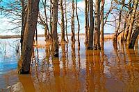 flood in oak wood
