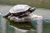 Tortoise on stone