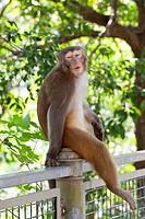 Monkey ape sleeping