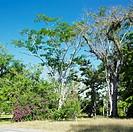 botany garden, Jardin Botánico de Cienfuegos, Cuba