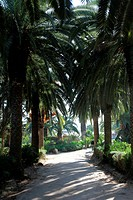 Beautiful palm garden_Carthage_Tunisia