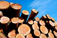 Stockpile of logging timber