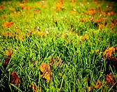 Sunlit autumn meadow