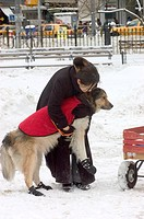 A WOMAN, GERMAN SHEPHERD & RED WAGON play in FRESHLY FALLEN SNOW in a MANHATTAN PARK _ NEW YORK, NEW YORK, USA