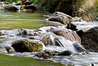 Fresh Water Stream
