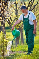watering orchard/garden _ portrait of a senior gardener