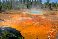 Unnamed Spring, Upper Geyser Basin,Yellowstone National Park, Wyoming, USA