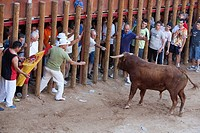 Capea non-lethal, amateur bullfight during Fiesta of Nuestra Señora and San Roque in the Plaza del Coso - Peñafiel, Valladolid Province, Castile and L...
