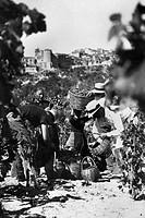 europa, italia, calabria, riace, contadini durante la vendemmia, 1920