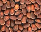 Nuts of Siberian Cedar Pine