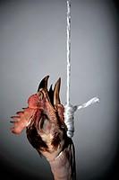 Plucked hanged chicken